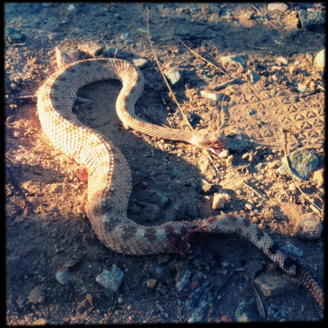 Feeling bad about the dead snake