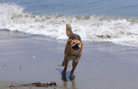Running on the beach - such a happy girl